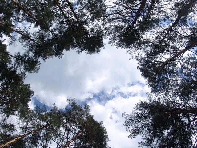 oblaka_v_lesu